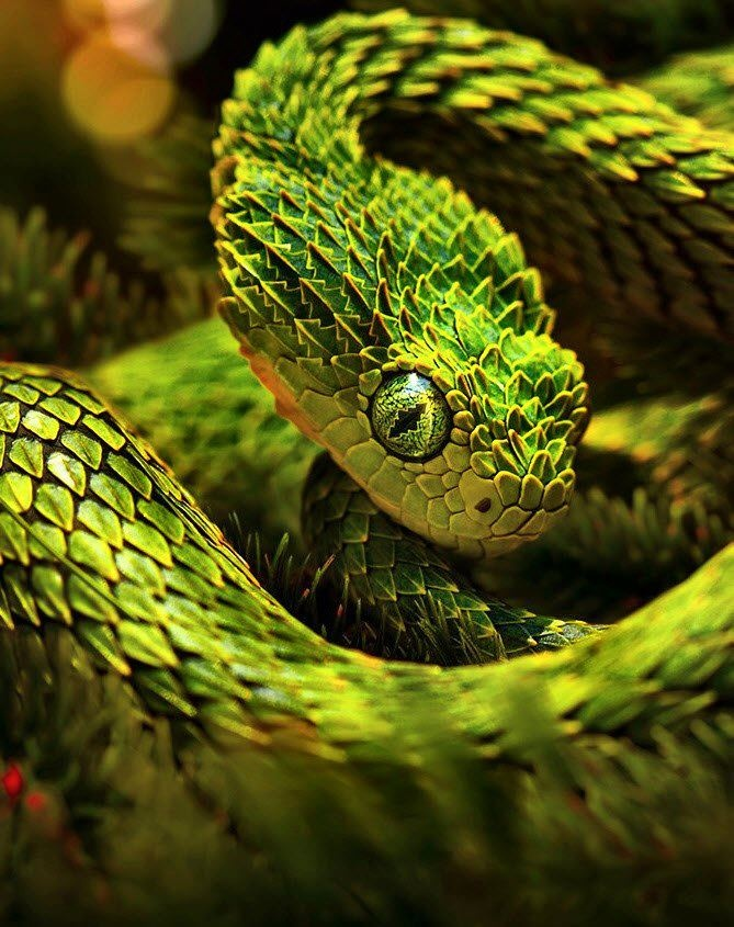 Snake Green Eyes II